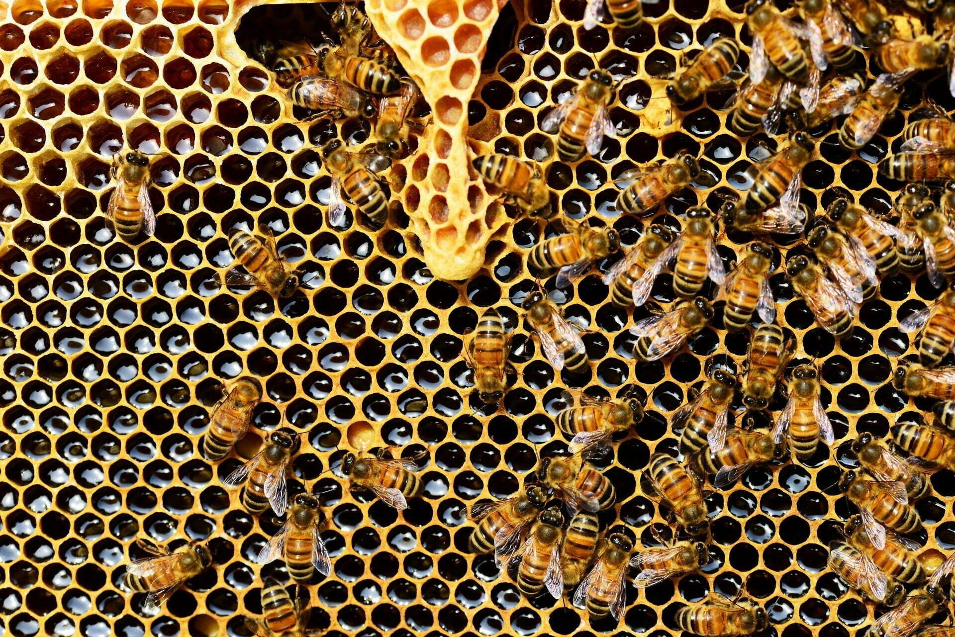 Polyform apiculture urbaine